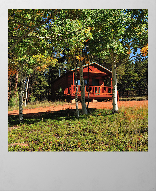 Cabin in the woods at Sourdough Valley Ranch
